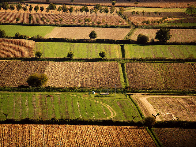 Da Flickr.com, foto di Studio Grafico EPICS, Campi ben coltivati, Licenza Creative Commons (CC BY-NC-SA 2.0)