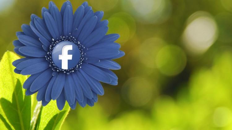 Foto da Flickr.com, Facebook Flower di mkhmarketing, Licenza Creative Commons (CC BY 2.0)